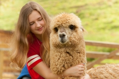 Young girl and alpaca